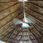 Really high ceilings with spaces in the thatched roof to let hot air out.
