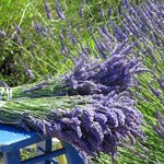 lavender bunches.  you can pick your own