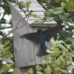 Bird Watching labrador Straits