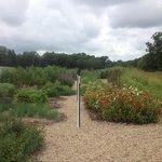 garden for fresh produce