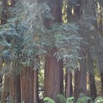 Outside the Redwood Ring