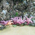 Starfish and sea anemones
