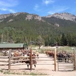 Best cared for and trained horses in the valley.