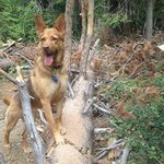 happy dog on trail from grounds
