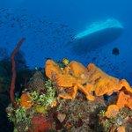 Divetech @ Orange Canyon dive site