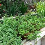 LuLu's Fresh Herb Garden