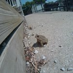Wild life on the steps of Dotty's cafe.