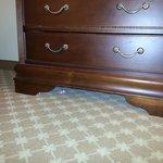 trash under dresser