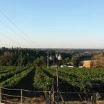Vue sur les vignobles