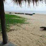 Photo de Green Leaf Village Resort