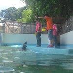 alimentando as focas