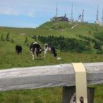 放牧牛と王ヶ頭ホテル