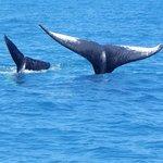 Avistagem de Baleias na temporada de Julho a Outubro