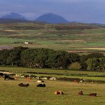 RSPB Loch Gruinart is a working farm as well as a nature reserve, we have 200 Cattle & 200 Sheep