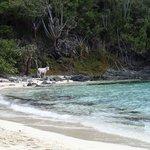 Island Donkey