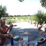 picknick met uitzicht over wijngaard