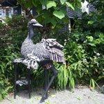 A vain ostrich