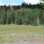 Hannagan Meadow