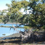 Mound Island