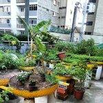 a horta orgânica de temperos