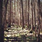 Cedar Meadow at Reed Pond