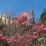 il castello a Merano a 15 minuti dal Kiendl col comodissimo Bus davanti all'Albergo