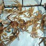新鮮な蟹を調理いたします。