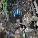 The fairy tunnel