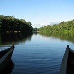 Salvador lake, Manu National Park