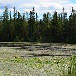 Rice Lake National Refuge