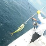 Foto de Panama Sport Fishing Lodge