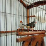 Resident finches
