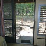 Sliding door and windows do open up!