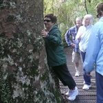 Personalised guided tours to the ancient kauri trees are available with host Ian