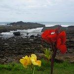 blooming flowers & view of ocean