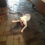 Every good bar needs a three legged dog!
