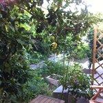 Cortiletto con pianta di limoni