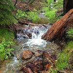 Late spring and the feeder creeks are still flowing strong