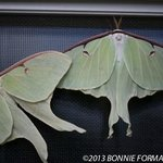 lunar moths on a campers mobile home