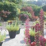 Garden at O'Driscoll's B&B.