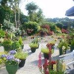 Garden at O'Driscoll's B&B