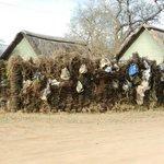 Poachers wall of shame!