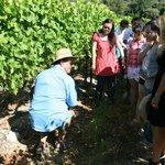 un peu de pédagogie sur la culture de la vigne