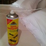 Ant spray provided by kitchen staff