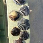 Morning's shells