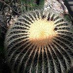Piękne kaktusy