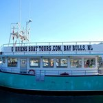 O'Brien's Whale and Bird Tours Inc.