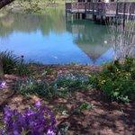 pond with koi
