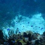 Great Reefs