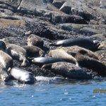 Seals seen on Zodiac trip